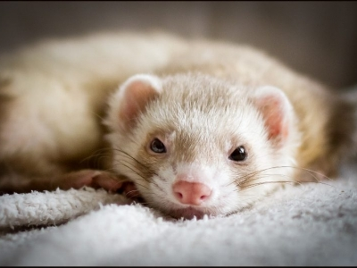 Tierarztpraxis Alte Feuerwache