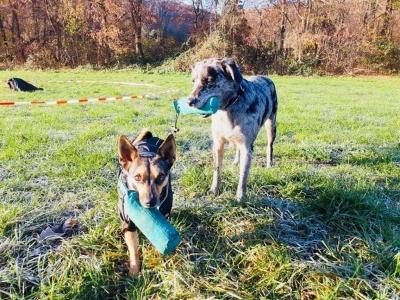 DOGCOMPANY Sonja Grüter Hundeschule SitzPlatzSteh
