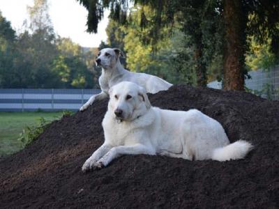 Huta-HundGerecht Hundetagesstätte